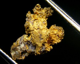 GOLD NUGGET .83  GRAMS  FROM ESPADARTE SHIPWRECK 1558  CO213