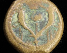 Biblical Coin Janenaeus Period  in display box SU765