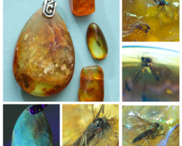 Pendant and 3 stones Natural Baltic amber with inclusions Diptera (fly) ins