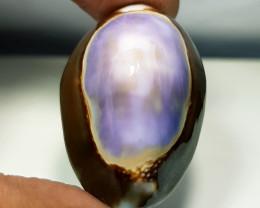 34.05 ct Natural Pacific Sea Shell Gemstone