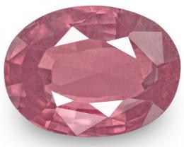 IGI Certified Sri Lanka Spinel, 3.28 Carats, Velvety Pink Oval