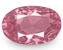 IGI Certified Sri Lanka Spinel, 2.57 Carats, Intense Pink Oval