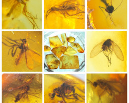9 stones Natural Baltic amber with inclusions Diptera (fly) insects