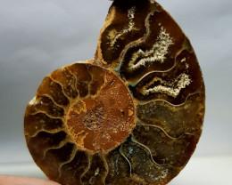 34.75 ct Natural Ammonite  Gemstone