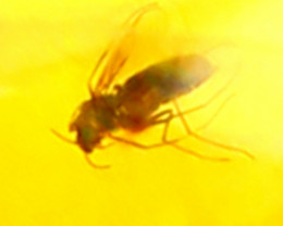 Baltic Amber 3.53Ct Natural Poland Fossil Insect inside Amber 19AF871