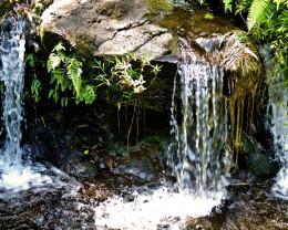 Hawaiian stream, North Shore, Big Island, Hawaii.