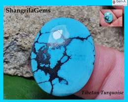 22mm Tibetan turquoise cabochon free form 22 by 18 by 4.5mm 14.5ct
