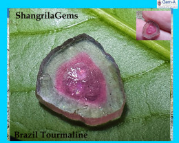 4.51ct 12mm Watermelon Tourmaline pink greenish yellow slice 12 by 11.3 by