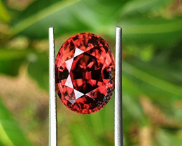 11.61 cts Orangish red zircon Sri Lanka.