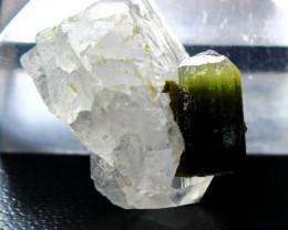 50.20 Cts Beautiful, Superb  Green  Cap Tourmaline Crystal Specimen