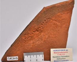 RARE HORODYSKIA EDIACARAN AUSTRALIAN FOSSIL (GR303)