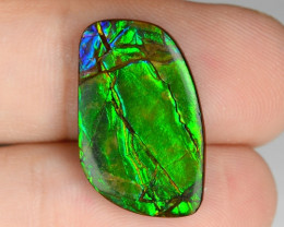 10.73 Cts Multi Color Play Natural Ammonite Gemstone From Canada