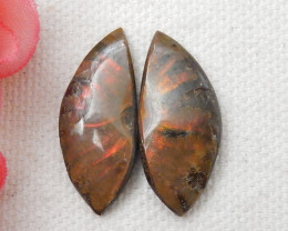 18.5CTS Twinkle Natural Ammonite Cabochon Pair ^ Fossil Cabochon Pair F35