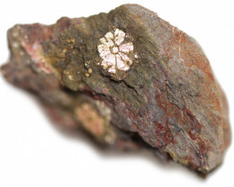 19.70 CTS RARE GOLDEN PINK CHERRY BLOSSOM SPECIMEN- JAPAN  [MGW5464]