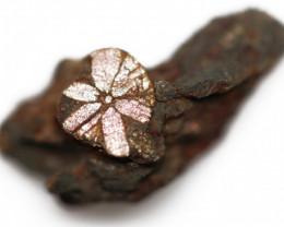 12.90 CTS RARE GOLDEN PINK CHERRY BLOSSOM SPECIMEN- JAPAN  [MGW5466]