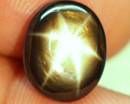 9.06 Carat Thailand Black Star Sapphire - Gorgeous