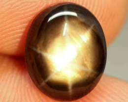 7.31 Carat Thailand Black Star Sapphire - Gorgeous