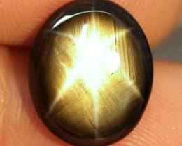 8.20 Carat Thailand Black Star Sapphire - Gorgeous