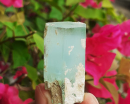 151.00ct Natural Multi Terminated Aquamarine Crystal