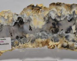 DENDRITIC OPALITE SLAB (GR163)