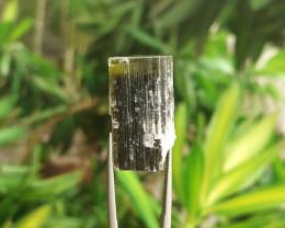 41.00cts Natural Green Cap Tourmaline Rough