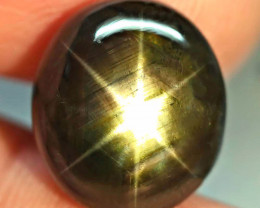 17.52 Carat Best Thailand Black Star Sapphire - Gorgeous