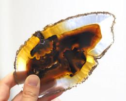 560 Cts Sliced  Chatoyant   Brazilian Agate Specimen CF 314