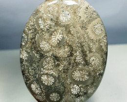 50.13 ct Natural  Fossil Coral Oval Cabochon Gemstone