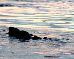 Reflections Kailua Kona, Hawaii.