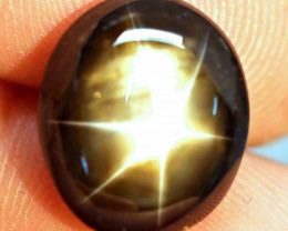 13.22 Ct. Fancy Thailand Black Star Sapphire - Gorgeous