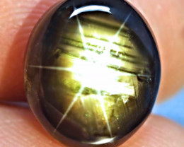 11.68 Ct. Fiery Natural Thailand Black Star Sapphire - Gorgeous