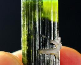 23.90 CT Natural  Beautiful Green Cap Tourmaline Crystal