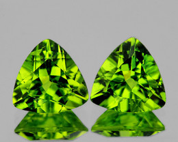7.00 mm Trillion 2 pcs 2.50cts Green Peridot [VVS]