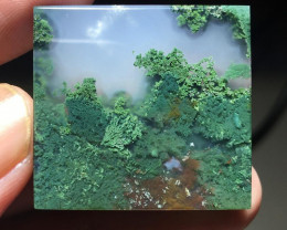 89.75 CT TOP PICUTRE EXOTIC TREE MOST AGATE FROM INDONESIA