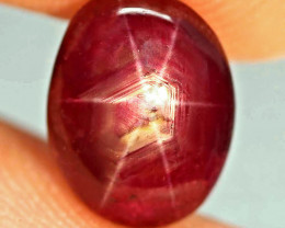 4.66 Carat Fancy Star Ruby - Gorgeous