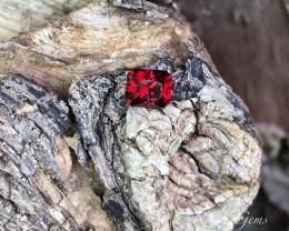 Malaya Garnet - 1.76 carats