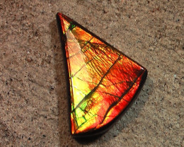 BRIGHT Color Changing Natural Ammolite Gemstone