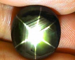 19.46 Carat Thailand Black Star Sapphire - Gorgeous
