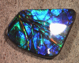 GREAT PURPLES Bright & Crisp Color Large Natural Ammolite Gemstone