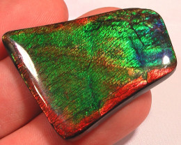 BIG BEAUTIFUL RAINBOW Top Quality Natural Ammolite Gemstone Collector