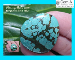 30mm 51ct Tibetan turquoise cabochon spiders web markings free form 30 by 2