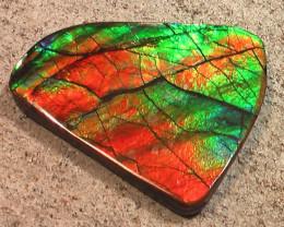 WOW Crisp Coloring Natural Ammolite Gemstone Large Bright Dragonskin