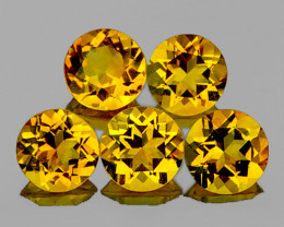 8.00 mm Round 5 pcs 8.70cts Golden Yellow Citrine [VVS]