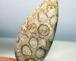 38.00 ct Natural  Fossil Coral Pear Cabochon Gemstone