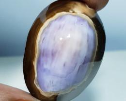 37.20 ct Natural Pacific Sea Shell Gemstone