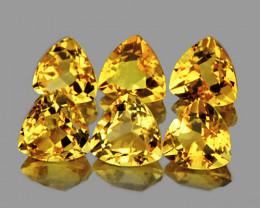6.00 mm Trillion 6 pcs 3.57cts Yellow Citrine [VVS]