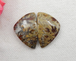 36.5CTS Twinkle Natural Ammonite Cabochon Pair ^ Fossil Cabochon Pair G291