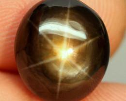 11.61 Carat Thailand Black Star Sapphire - Gorgeous