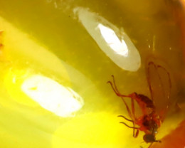 Baltic Amber 0.86Ct Natural Poland Fossil Insect inside Amber D2404/D1