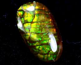 0.80cts Natural Rainbow Colour Canadian Ammolite / MA153